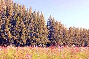 Beautiful trees in flowered field
