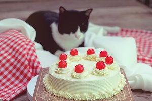 Sponge cake with buttercream and cat