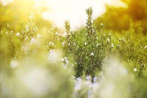 vintage green grass