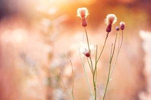 vintage meadow wild flowers