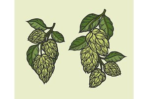 hops and leaves