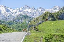 Road in Picos de Europa in Asturias,