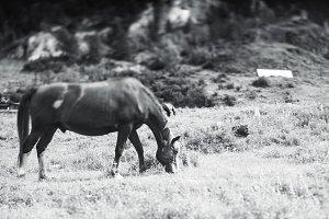 Horse pasturing, tilt-shift shooting