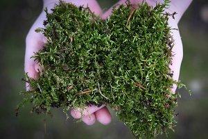 Moss in Child's Hands