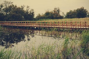 wooden path over water