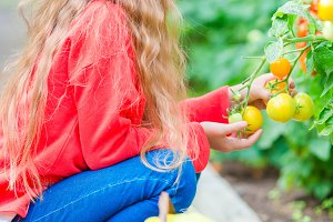 Adorable little girl harvesting cucumbers and tomatoes in greenhouse. Portrait of kid with red tomato in hands.