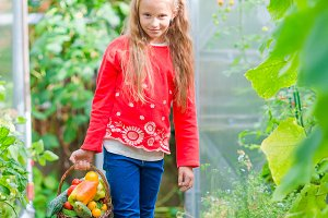 Little girl collecting crop cucumbers and tomatos in greenhouse. Portrait of kid with big busket full of vegetables in hands. Harvesting time