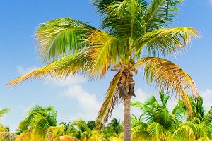 Palm trees on white sand beach with two loungers. Amazing tropical picture