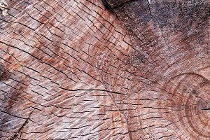 Wood texture of tree trunk