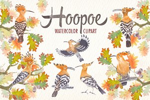watercolor hoopoe bird clipart