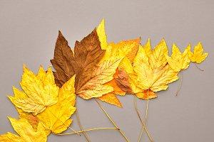 Autumn Fashion.Fall Leaves Backgroud