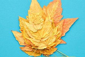 Autumn Fashion. Fall Leaves Background. Vintage.