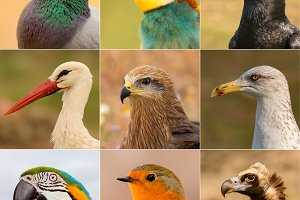 Portraits of different birds