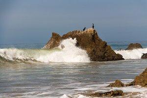 Cormorant Birds on a rock in Malibu
