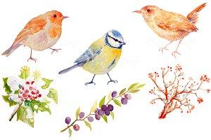 Bird Clipart - Blue Tit, Wren, Robin