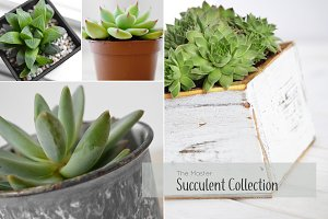 The Master Succulent Collection