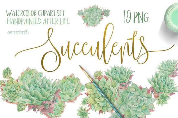 Succulents-single species package