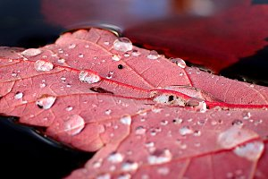 Droplets of Autumn