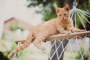 Ginger cat in a hammock
