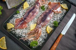 Fresh cuttlefish