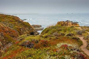 Coast with vegetation