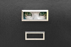 cat eyes locked in filing cabinet