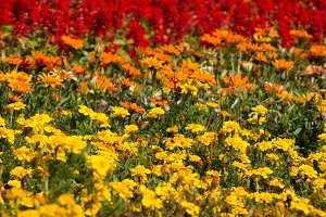 Wild Meadow - yellow, orange and red flowers