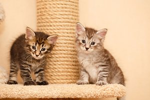 Two cute little kittens