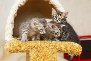 Three cute kitten