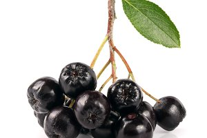 Chokeberry with leaf isolated on white background. Black aronia berries