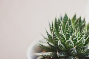 Simple Spiky Succulent