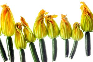 Fresh zucchini flowers top view isolated on white