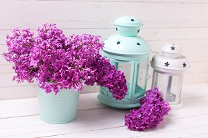 Bright lilac flowers