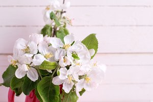 Apple tree flowers in pitcher