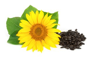 sunflower with seeds and leaves isolated on white background