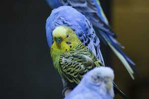 Parakeets - The Standout