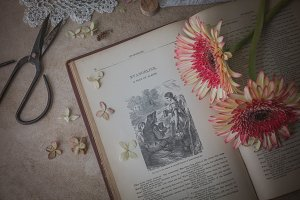 Vintage book and daisies