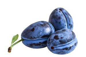 Three dark blue plums  isolated on white background