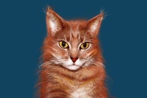 Orange cat on transparent background
