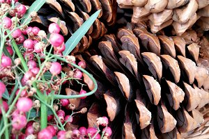 Berries and pine cones