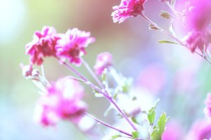pink flowers in nature