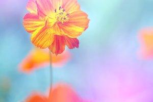 yellow orange flower in nature