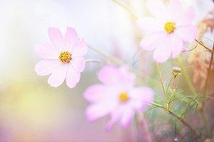 eadow beautiful flowers in nature