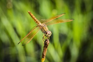 shot of real dragonfly outdoors