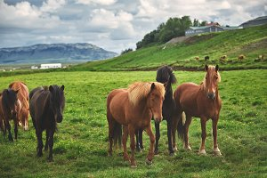 herd of horses in a field
