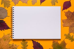 Notebook with Autumn leaves