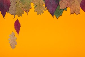 Orange background with Autumn leaves