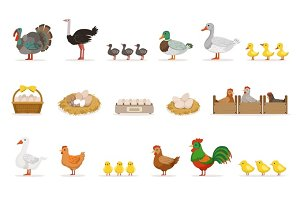 Farm Birds Grown For Meat and For Laying Eggs, Organic Farming Set Of Vector Illustrations With Animals