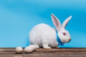 Easter white rabbit