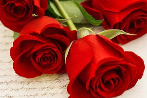 Red roses and old love letters
